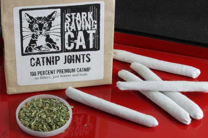Can Cats Get High Off Catnip